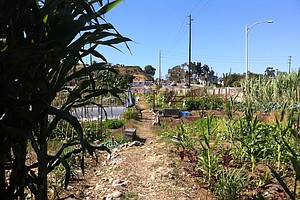 Urban Farming - What Are Your Rights?