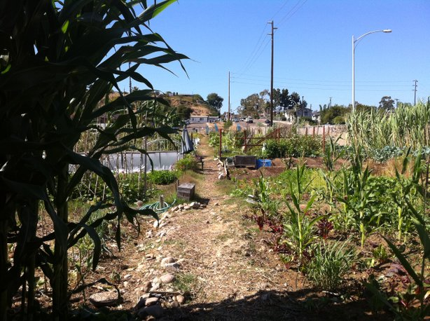 The International Rescue Committee's New Roots Community Farm brings refugees...