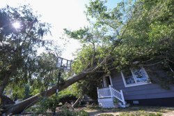 A tree brought down by Hurricane Irene leans against a house on August 29, 20...