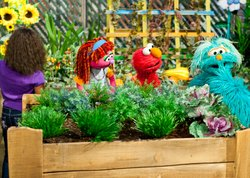 "Rosita, Elmo, and Lily learn how growing food in a community garden is a great way to get food and give back to neighbors in need as part of Sesame Street's primetime television special ""Growing Hope Against Hunger."" ©  2011 Sesame Workshop."