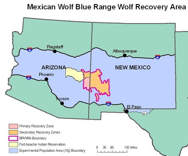 Gray Wolf Numbers Gray Wolf Reintroduction