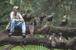 Jeff Palmer and turkeys resting on a log.