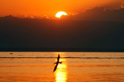 Pelicans fly over the Salton Sea at sunrise on July 7, 2011 in Salton City, C...