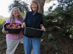 Lydia Vassar (left) and Deborah Small harvest native fruits and plants from t...