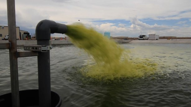Algae can be used to create a molecularly similar fuel to fossil fuel.
