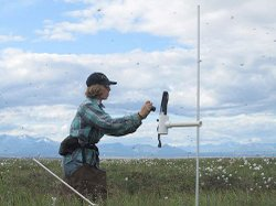 Permafrost monitoring scientist at work. The site photographs and vegetation sampling information collected will help Refuge staff detect changes over time in the amount of plant cover and the percent of water within the study area on Arctic Refuge's northern tundra.