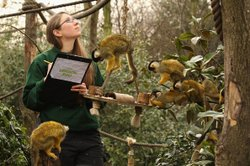 A zookeeper counts the squirrel monkeys at the London Zoo.