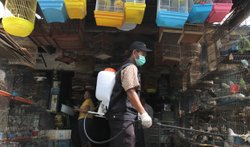 A government veterinarian worker sprays anti-bird flu disinfectant over birds...