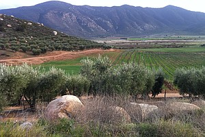 Baja Wineries Say New Law Allowing Development Threatens ...
