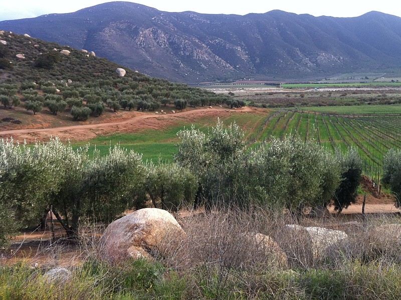 A corner of Valle de Guadalupe, which produces the majority of Mexico's wines.