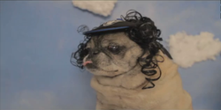 One of the stars of the Bone Thugs-N-Harmony tribute video 'Bone Pugz.'