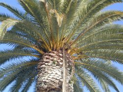 A palm tree near San Diego's airport.