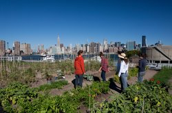 Annie Novak shares her knowledge of urban farming with a team of volunteers o...