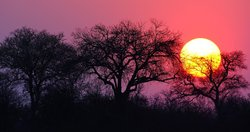 Sunset in the Timbavati Game Reserve, which shares a common unfenced border with the Kruger National Park, where the while lions were born.