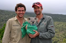 Dr. Sean Fitzgibbon and Dr. Bill Ellis with a koala, subject of their researc...