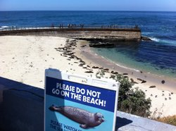 Seals at the La Jolla Children's Pool on May 15, 2012, the day the rope was t...