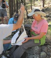 Jacobson weighs one of the two nestlings. Females are typically heavier than males.