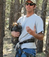 Kenneth Jacobson, eagle management coordinator for the Arizona Game and Fish, holds a 6-week-old nestling near Lake Mary in northern Arizona.