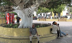 Daily life in the main plaza of San Fernando, T...