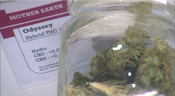 The Mother Earth Alternative Healing Cooperative was the last licensed medical marijuana co-op in San Diego County. It closed its doors in September 2012.