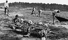 African Americans collecting bones of soldiers ... (18965)
