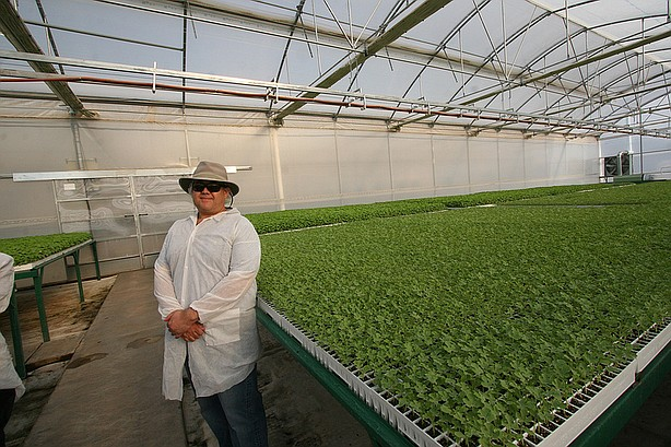 Carlos Fisher, co-owner of Sierra Seed Company, inside one of his greenhouses...