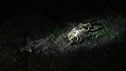 A flashlight illuminates a human skeleton at Texas State University's