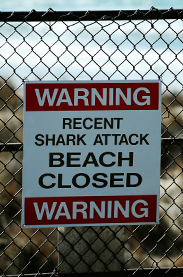 Surfer Killed In Shark Attack Off Vandenberg AFB