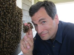 David Pogue touching a swarm of bees.