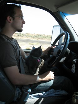 Long-haul trucker with his cat.
