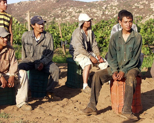 Mexican immigrants on a grape farm in California.