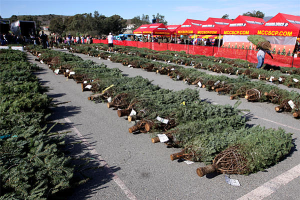 Military families pick out Christmas trees at the Camp Pendleton Trees for Tr...
