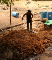 A mezcal producer lifts crushed agave fibers into a wheelbarrow. The mash is then fermented.