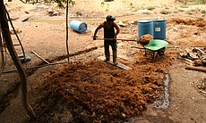 A mezcal producer lifts crushed agave fibers in...