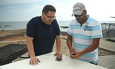 Jorge Meraz learns about the oyster farming process and watches as Carlos Guerrero opens one up to see how they taste.