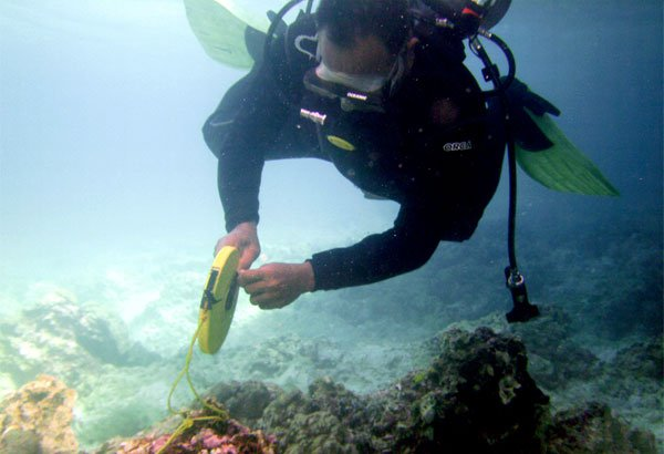 Philippine diver assesses damage to Tubbataha Reef on January 22.