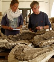 Gunther Kunst and Irene F. Mueller with Egypt's earliest complete horse skeleton.