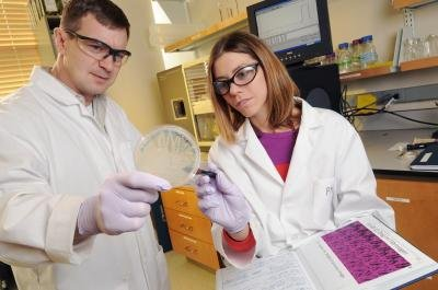 Researchers use bacteria growing on the plate as a tool for evolving molecules such as antibodies. The instrument in the background allows binding characteristics to be determined quantitatively. Shown are Thomas Barker, an associate professor in the Wallace H. Coulter Department of Biomedical Engineering at Georgia Tech and Emory University, and Ashley Brown, a post-doctoral fellow in Barker's laboratory.
