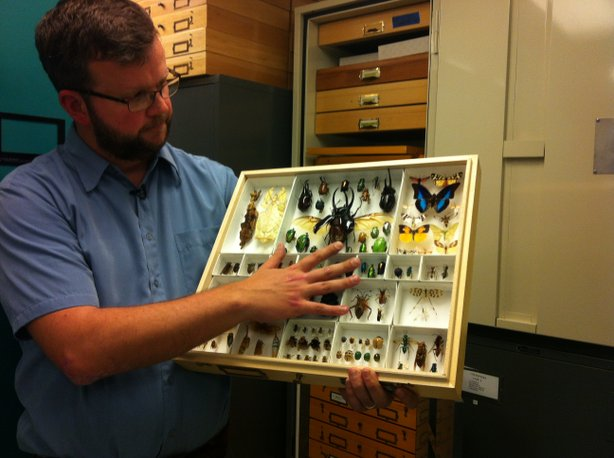 Dr. Michael Wall showing one of the trays of specimens from the San Diego Natural History Museum's collection.