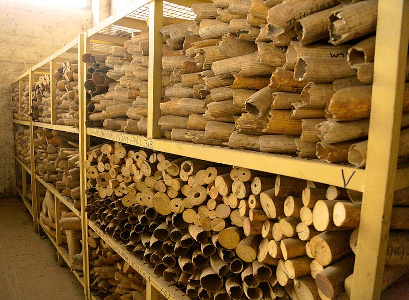 Stockpiles of seized ivory, Dar es Salaam, Tanz...