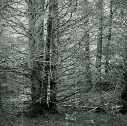 One of James Chronister's forest paintings, on view at Lux Art Institute in E...