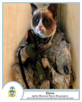 Gino, military working cat, 947th Police Detachment, 3d U.S. Infantry Regimen...