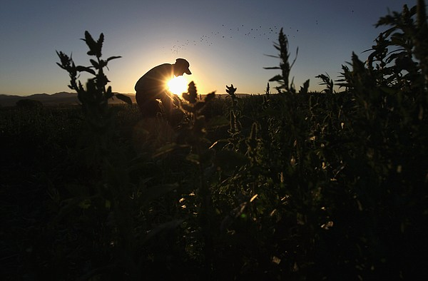 San Diego Farm Bureau Chief Eric Larson said dry conditions mean farmers will...