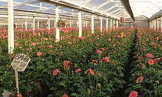 Dramm & Echter, horticultural greenhouse producer, 1150 Quail Gardens Drive, Encinitas, Calif. 92024