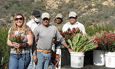 Dawn and the Rainbow Hill Protea crew after har...