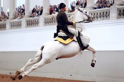Capriole Spanish Riding School, Vienna, Austria.