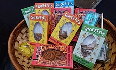 Some bug snacks you could buy at the gift shop.