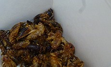 Crispy Curried Crickets