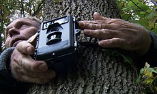 Cornell ecologist Bernd Blossey sets a trail cam to record deer behavior.