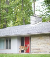 Deer in front of house.